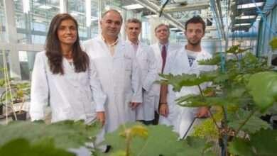 Científicos desarrollan nuevo método para crear fertilizantes