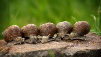 Babosa y caracoles