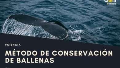 conservación de ballenas