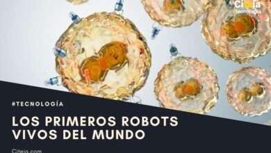 XENOBOTS: los primeros robots vivos del mundo