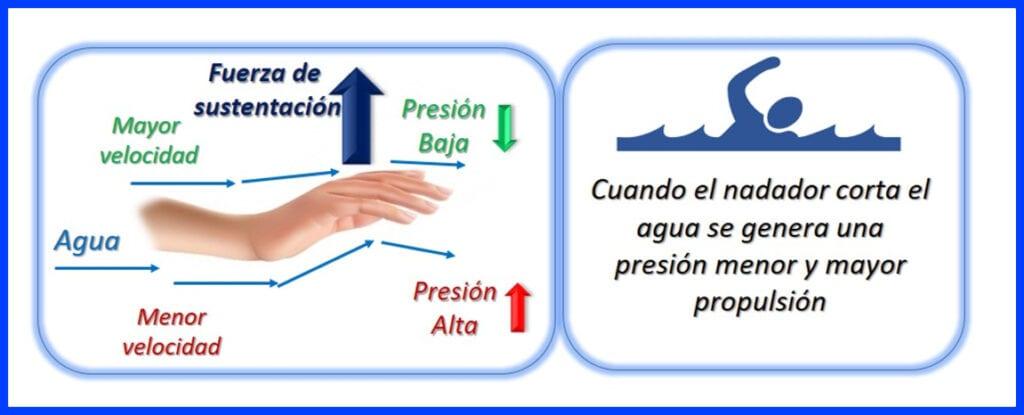 Aplicación del Principio de Bernoulli - Natación