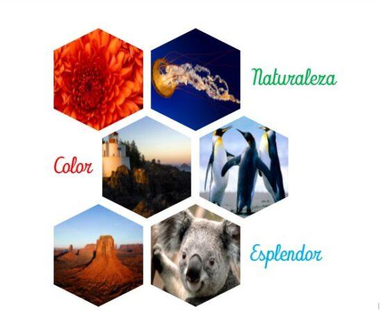 Collage word listo